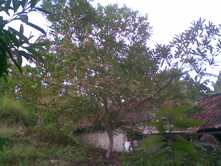 Pohon Ganitri