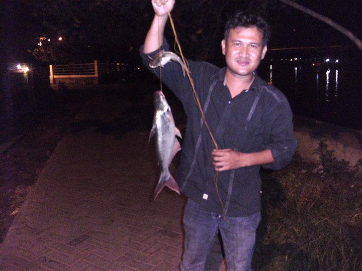 selain Ikan Patin , ikan kalabau juga menjadi target para pemancing.