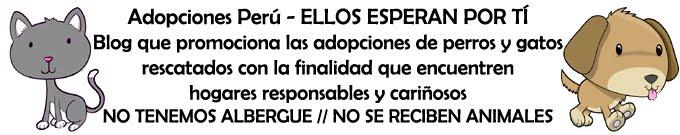 ADOPCIONES PERU - ELLOS ESPERAN POR TÍ