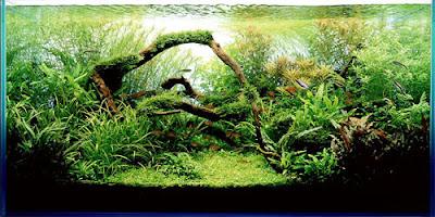 Aquarium Art 8