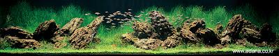 Aquarium Art 5