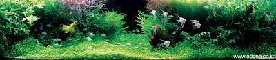 Aquarium Art 1