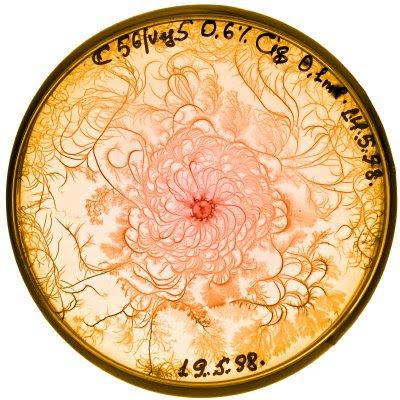 Petri Art (11) 9