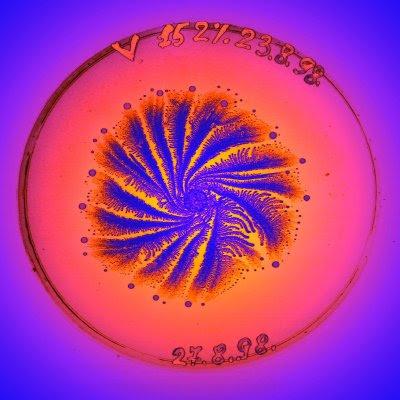 Petri Art (11) 6