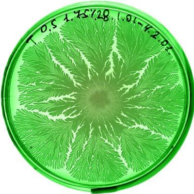 Petri Art (11) 7
