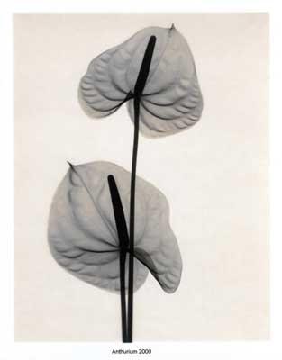 X-Ray Art (3) 1