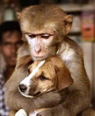 dog & monkey