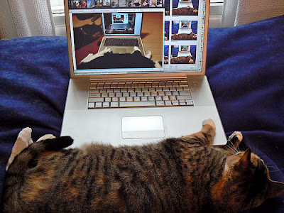 cat sleeping near laptop