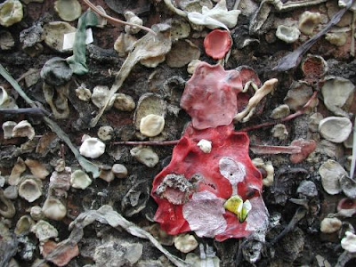 Bubblegum Alley San Luis Obispo (18) 16