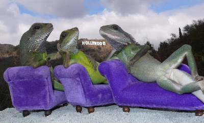 three iguanas on a tiny couch