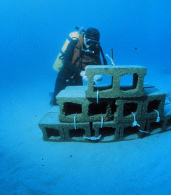 Construction in place of an artificial reef from hollow tile blocks for artificial reef