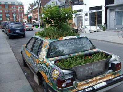 Growing  plants in car