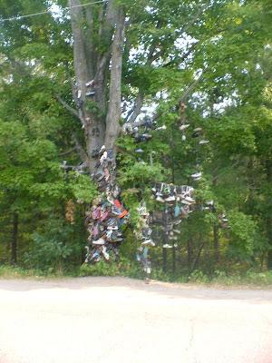 Shoe Trees (36) 15