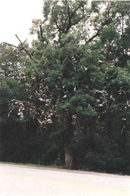 Shoe Trees (36) 9