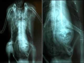 Unbelievable X-rays (12) 10