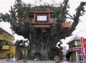 Okinawa's Treehouse Restaurant.