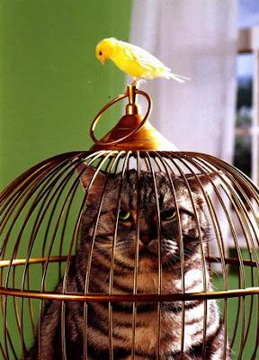 Cats+(11).jpg