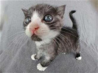 Cats+(15).jpg