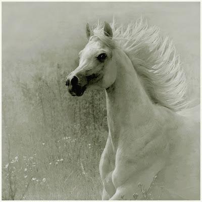 Horse+(10).jpg