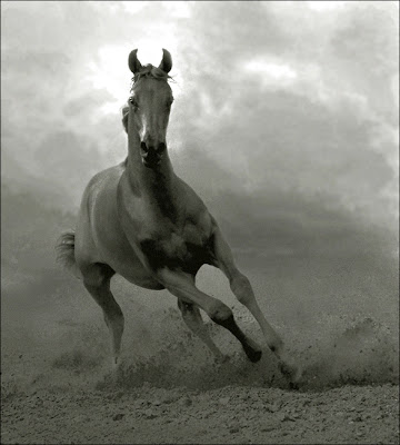 Horse+(5).jpg