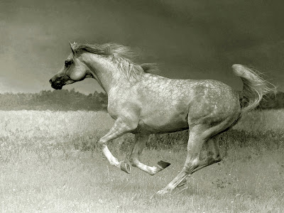 Horse+(6).jpg