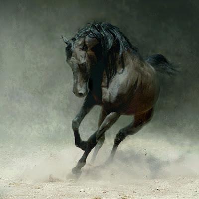 Horse+(1).jpg