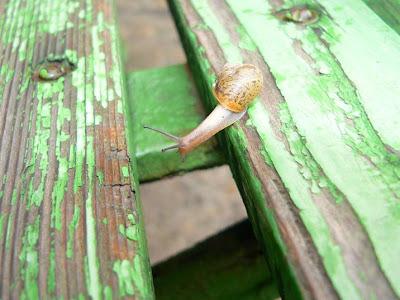 Snail+3.jpg