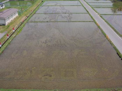 Beautiful Rice Field Art 4