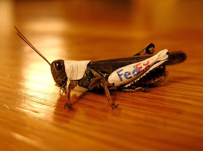 Creative Use Of Insects In Advertising (5) 1