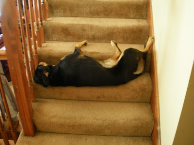 Dog sleeping on the staircase