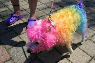 Colorful Dogs (16) 2