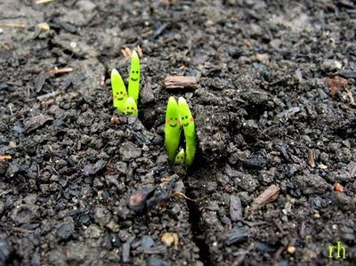 Sprouting (2) 2