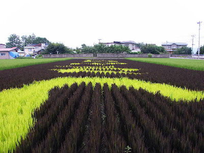 Beautiful Rice Paddy Art (4) 4