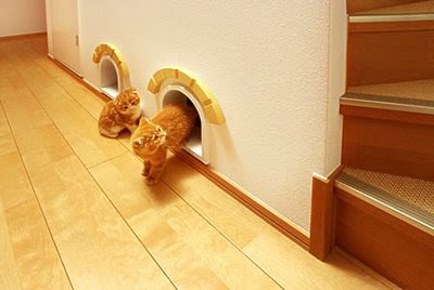 Cat-Friendly House Design (7) 7