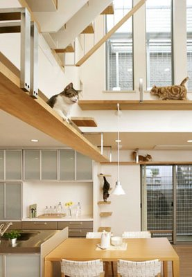 Cat-Friendly House Design (7) 1