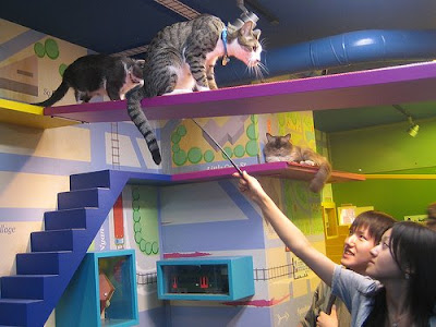 Awesome Cat-Friendly House Design 9