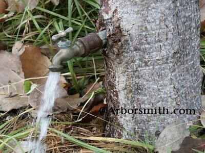Arborsculpture (3) 1