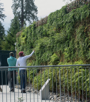 The Living Wall At Vancouver Aquarium: