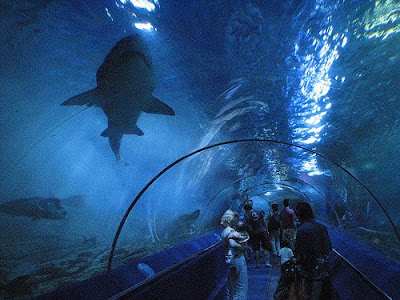 Cool Aquariums and Unusual Fish Tanks Designs (50) 1