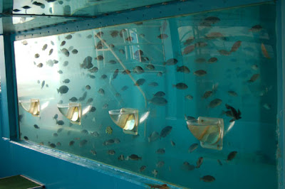 The Oita Marine Center Fish Tank (6) 3