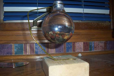 Light Bulb Aquarium