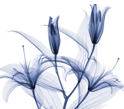 Flowers X-rays (15) 4