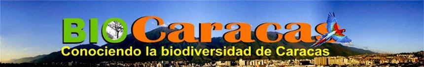 Biocaracas