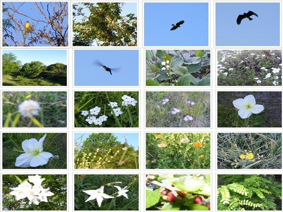 Maquetas Sobre La Naturaleza   apexwallpapers.com