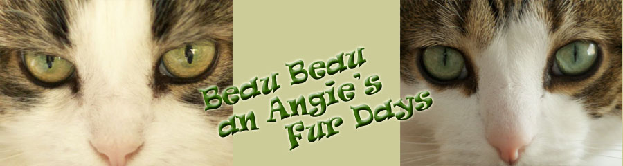 Beau Beau &amp; Angie&#39;s Fur Days