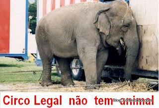 imagem informa; elefante deprimido em circo