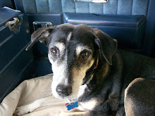 Bella the Wonderdog - RIP 1995 - 2008