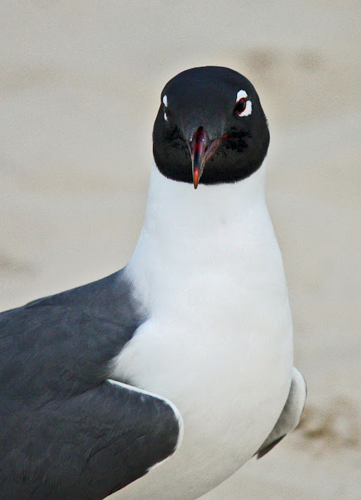 The Face of a Seagull