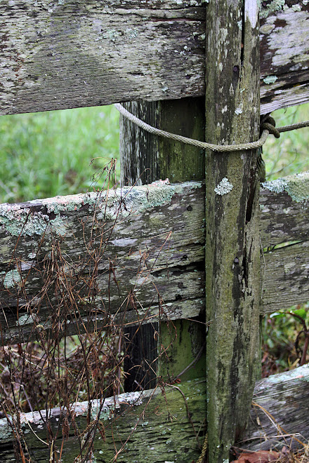 Lichen-Covered Fence