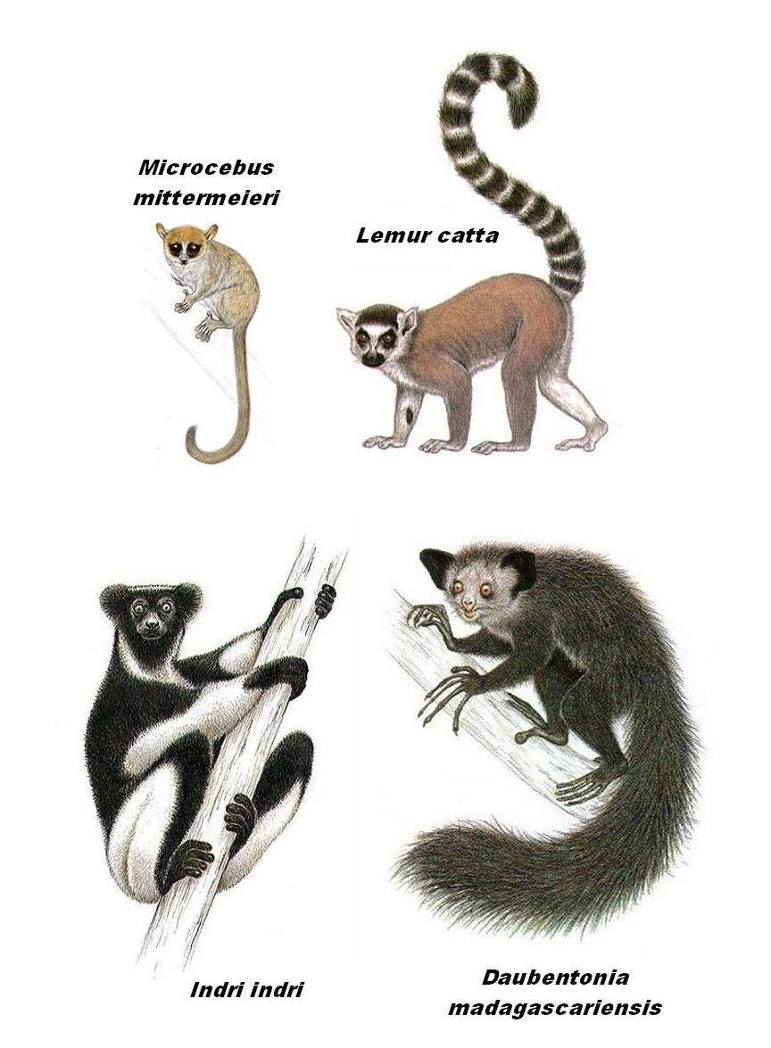 Q Son Los Lemures Los de abajo a la izqu...